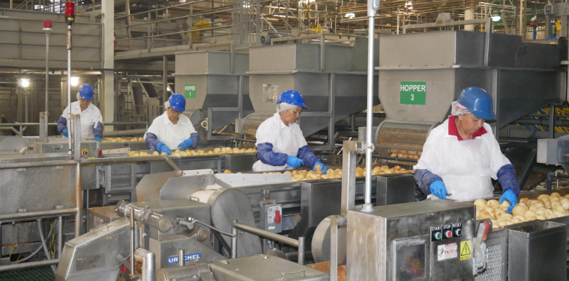 Workers sorting fruits