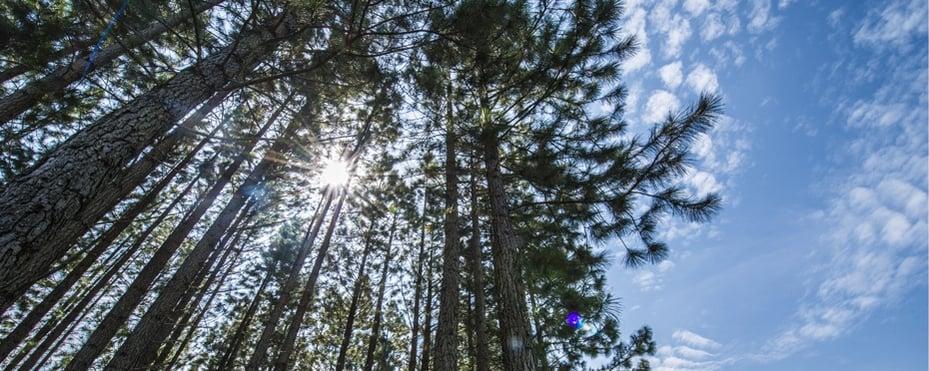 sustainability-nurturing-nature-tree-img